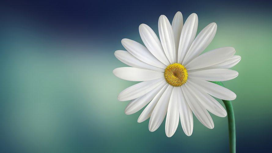 99%の人が個性の花を開かせることが出来ない理由とは?